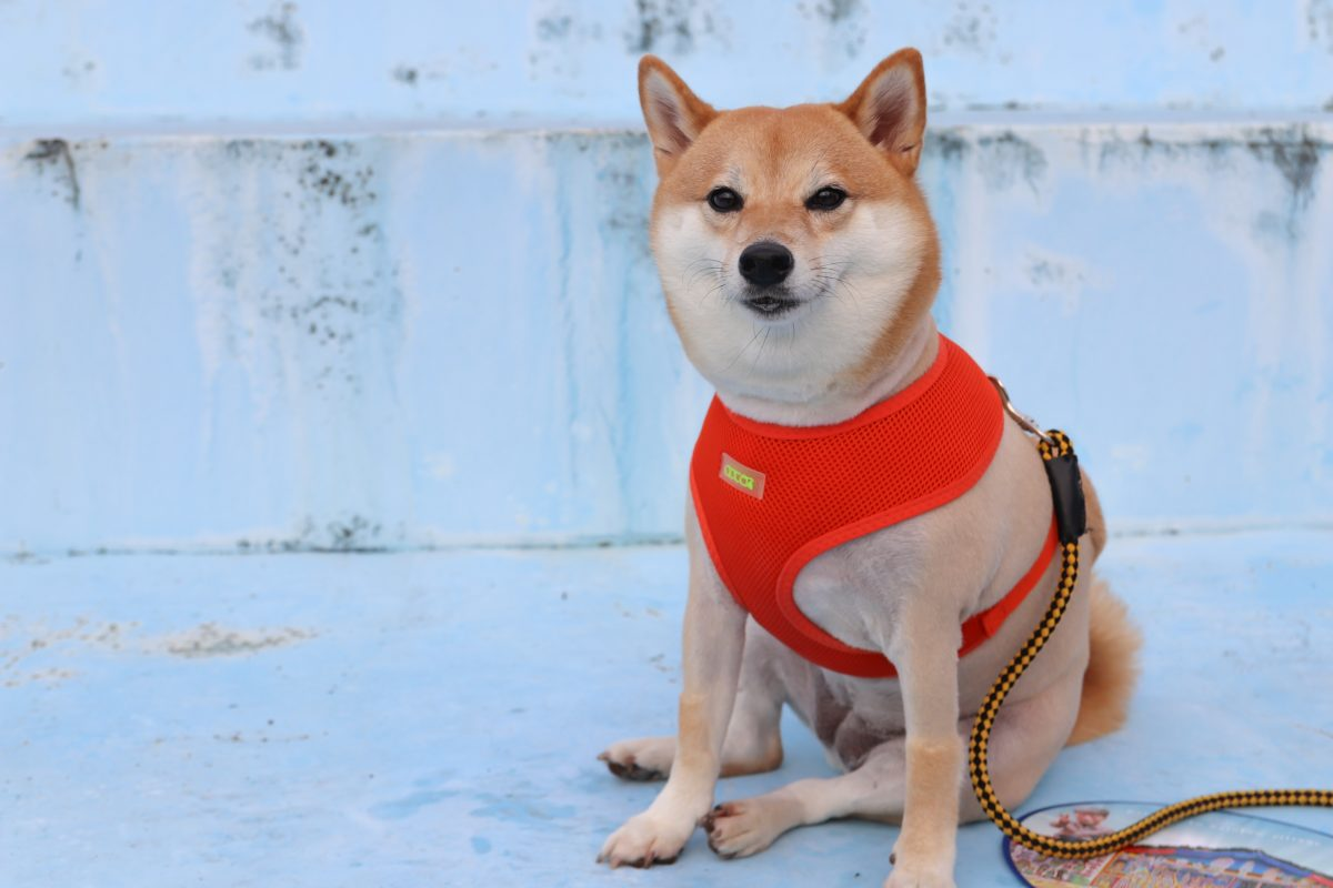 "DogePal Creator Clarifies On ""Random Anonymous Tipping"""